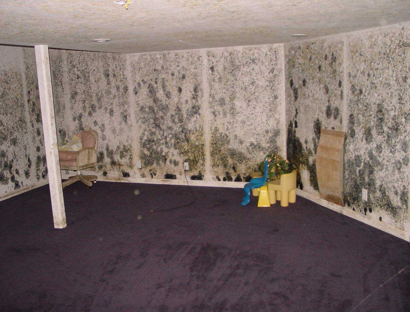 Indoor Air Quality Testing - Mold Walls