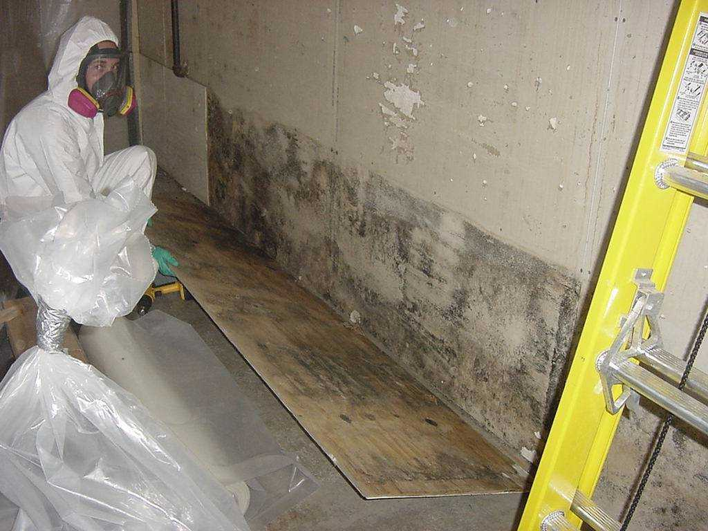 Indoor Air Quality Testing - Mold Walls Testing